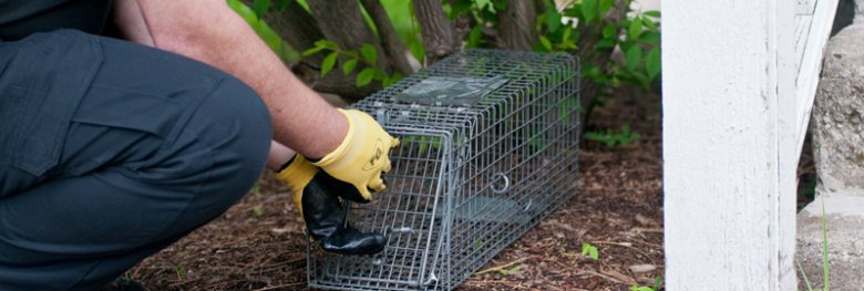 Animal trapping services - Do Your Research Before Hiring